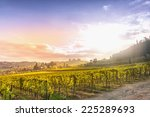 vineyards in chianti | Shutterstock . vector #225289693
