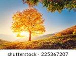 majestic alone beech tree on a... | Shutterstock . vector #225367207