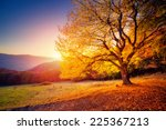 Majestic Alone Beech Tree On A...