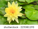 Closeup Of Yellow Waterlily In...