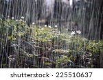rain in the spring forest.... | Shutterstock . vector #225510637