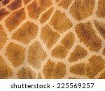 Giraffe Skin Texture For...
