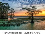 sunset over bald cypress from... | Shutterstock . vector #225597793