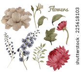 chrysanthemum  roses ... | Shutterstock . vector #225618103