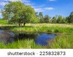 Pond And Grassland At Arne In...