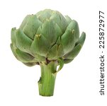 green artichoke on white... | Shutterstock . vector #225872977