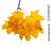 autumn maple branch with leaves ... | Shutterstock . vector #225930967