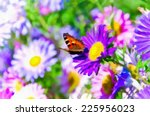 butterfly is sitting on purple... | Shutterstock . vector #225956023
