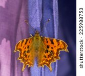 Extreme Close Up Of A Comma...