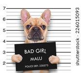 Criminal  Bulldog   At The...