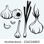 heads of garlic. young garlic... | Shutterstock .eps vector #226226803