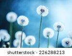 Dandelions On Blue Background...