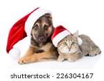 Stock photo cat and dog with santa claus hat isolated on white background 226304167