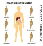 human anatomy. digestive system.... | Shutterstock .eps vector #226672123
