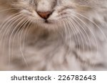 Small photo of Long white whiskers and nose of a gray cat.