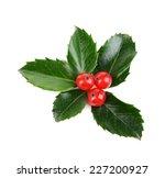 leaves of mistletoe with... | Shutterstock . vector #227200927