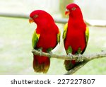 A Pair Of Red Parrot With Gree...