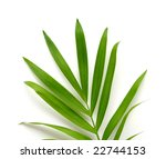 isolated palm tree leaves | Shutterstock . vector #22744153