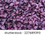 Violet Leaf Background