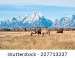 Horses Grazing In Grand Teton...