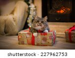 Tabby Cat Plays At The...