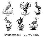 Stork  Heron  Crane And Egret...