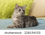 Cat  Resting Cat On A Sofa In...