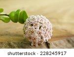 White Flower Hoya Carnosa On...