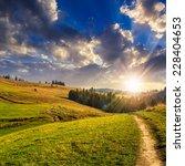 pine trees near path on... | Shutterstock . vector #228404653