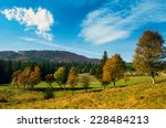 trees in autumn forest with... | Shutterstock . vector #228484213