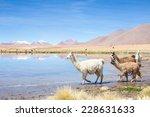 Alpacas By Mirror Lake ...