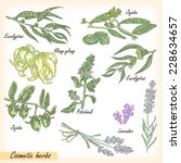 hand drawn cosmetic herbs.... | Shutterstock .eps vector #228634657