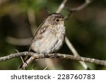 Small photo of Juvenile African dusky flycatcher, Muscicapa adusta on the lookout for a snack.