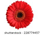 Red Gerbera Isolated On White...