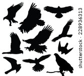 Постер, плакат: Raptors eagles vector silhouette