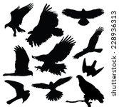 Raptors Eagles Vector...