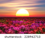 Colorful Flowers On A...