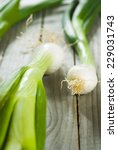 fresh spring onions with root... | Shutterstock . vector #229031743