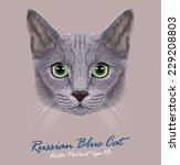 Stock vector vector portrait of domestic cat russian blue cat cute young cat with green eyes 229208803