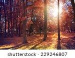 autumn landscape in the city... | Shutterstock . vector #229246807