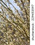 spring blossom | Shutterstock . vector #229453597