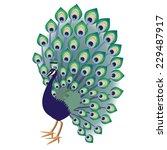 green blue decorative peacock... | Shutterstock . vector #229487917