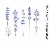 watercolor lavender set....   Shutterstock .eps vector #229792723