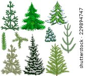 set of fir trees and fir... | Shutterstock . vector #229894747