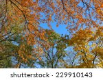 The Trees With Colorful Leaves...