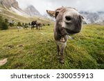 Wide Angle Picture Of Donkey I...