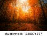 Autumn Forest. Beautiful Natur...