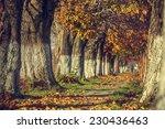 serene autumn landscape with...   Shutterstock . vector #230436463