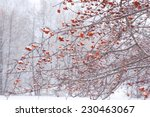 Winter Nature Background Of...