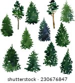 Set Of Conifer Trees Drawing B...
